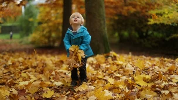 Childhood Moments: Boy Holding Autumn Leaves