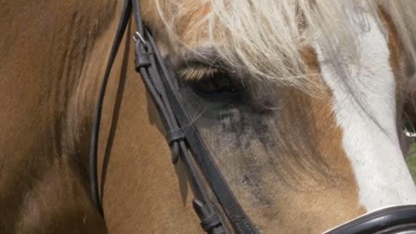 koňské oko zblízka