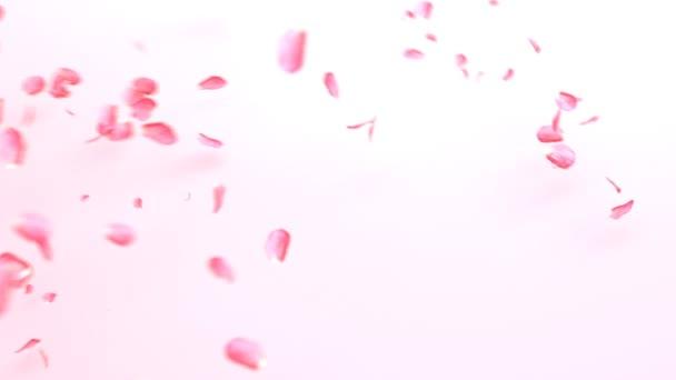 Rózsaszín rózsa szirom boldog Valentin-napot