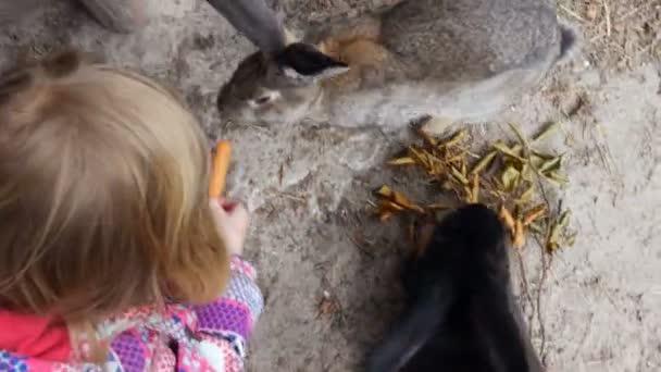 Kind, die Verfütterung von Karotten an Hasen Overhead