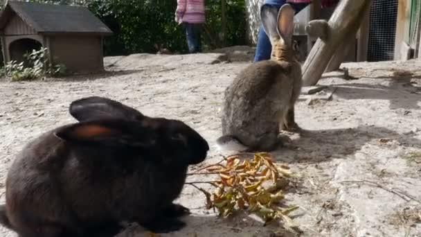 Hasen in einer Outdoor-Stift und Menschen