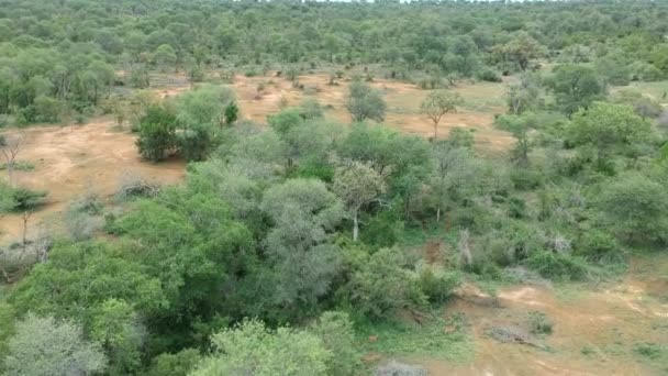 African Savanna Lascape Aerial