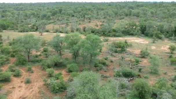 Kruger National Park Savannah Terrain Aerial