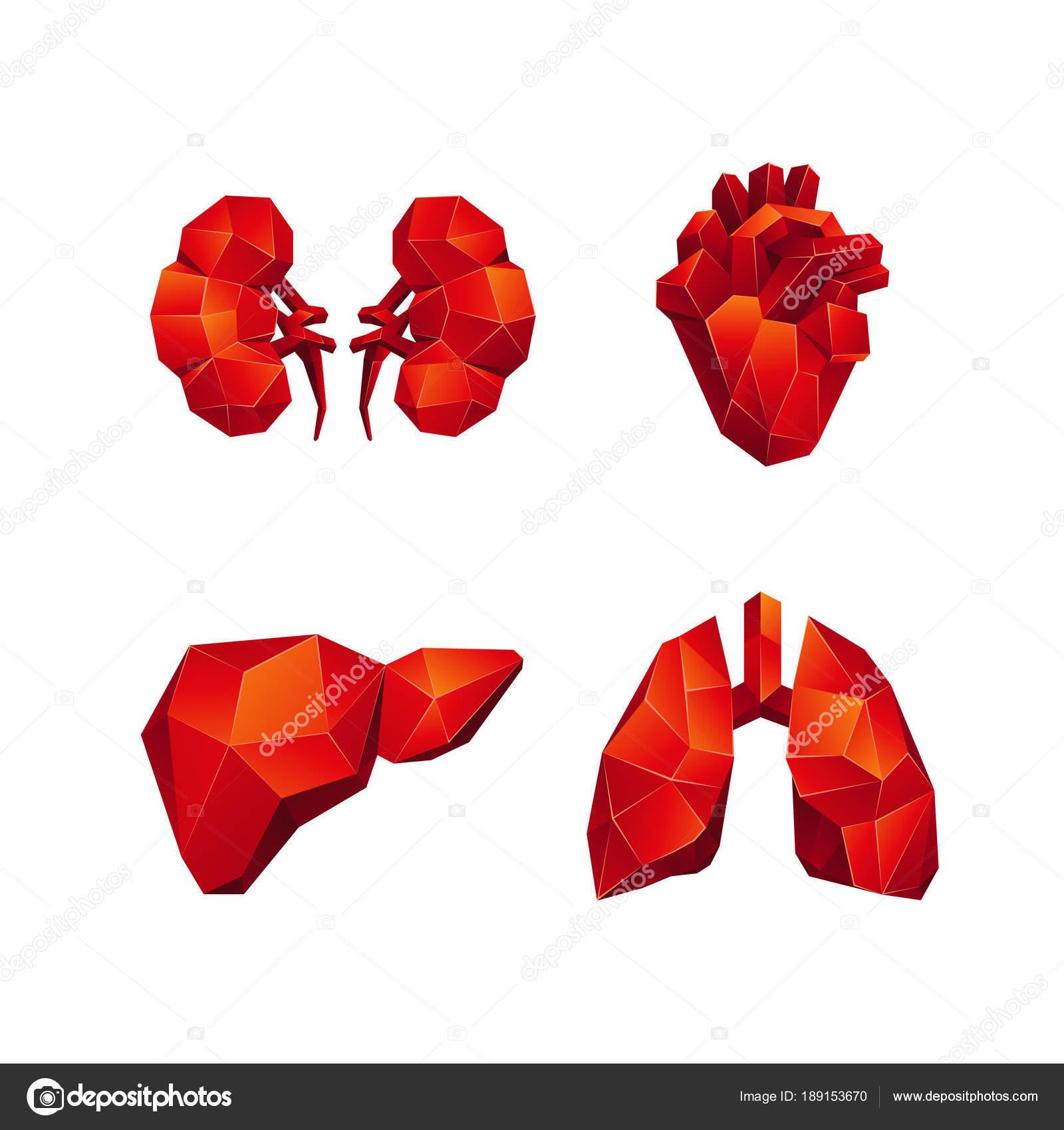 Rode lage poly menselijke interne organen ingesteld op een zwarte ...