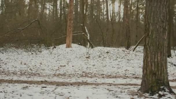 Egy sportoló parkol. Fiatal motivált nő narancssárga dzsekiben és kék lábban kocog a téli erdőben. Fókuszált illeszkedő női futó intenzív edzés és csinál szabadtéri fitness gyakorlatok. Menetvonal