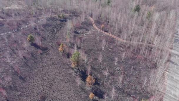 Luftaufnahme des verbrannten Waldes. Waldbrände. Gefahr. Umweltverschmutzung. Verbrannte Bäume in Flammen. Konzept der Umweltschäden, des Klimawandels und der globalen Erwärmung.