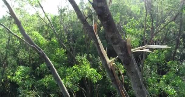 Damaged trees in green lush forest in bright sunshine