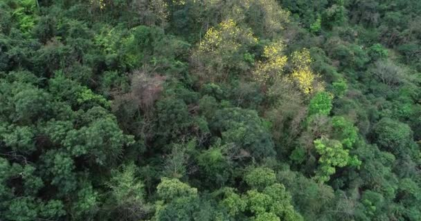 Aerial footage of tropical forest in spring in mountains