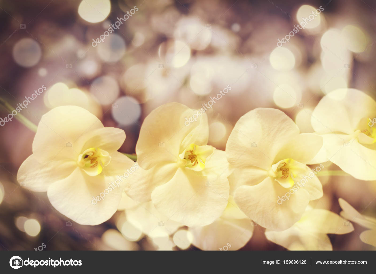 Yellow Bokeh Blurry Background With Nice White Orchid Flowers