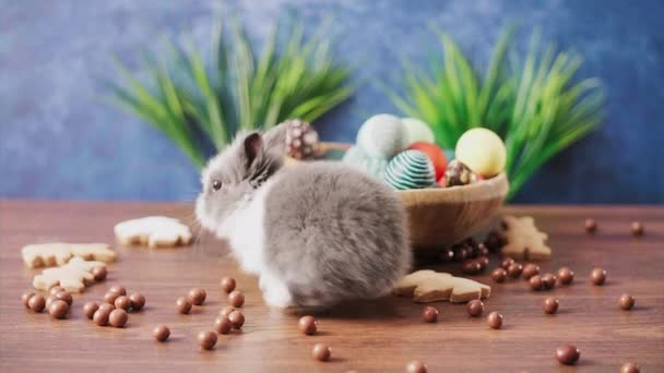 Cute Easter bunny in basket with colorful eggs and candies on wooden table. Easter holiday decorations, Easter concept background.
