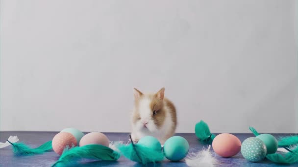 Cute Easter bunny on table with colorful eggs and feathers. Easter holiday decorations, Easter concept background.