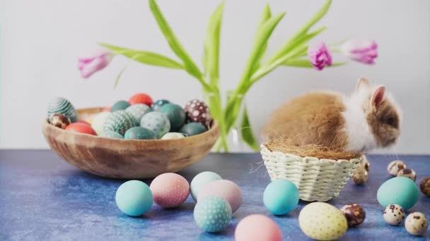 Roztomilý velikonoční zajíček na stole s barevnými vejci a tulipány. Velikonoční prázdninové dekorace, Velikonoční koncept pozadí.
