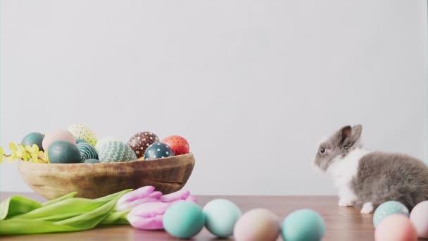 Roztomilý velikonoční zajíček na dřevěném stole s barevnými vejci a tulipány. Velikonoční prázdninové dekorace, Velikonoční koncept pozadí.