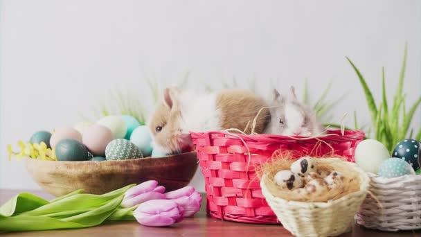 Roztomilé velikonoční zajíčci v košíku s barevnými vejci a tulipány na dřevěném stole. Velikonoční sváteční dekorace.