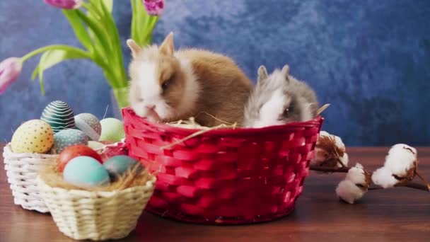 Cute Easter bunnies in basket with colorful eggs and tulips on wooden table. Easter holiday decorations.
