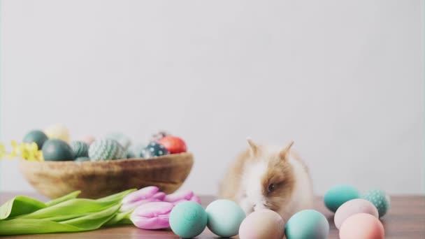 Aranyos húsvéti nyuszi fa asztalon színes tojásokkal és tulipánokkal. Húsvéti ünnepi díszek.