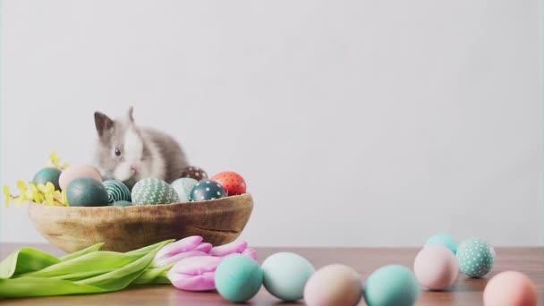 Niedlicher Osterhase auf Holztisch mit bunten Eiern und Tulpen. Osterfestdekoration, Osterkonzept Hintergrund.