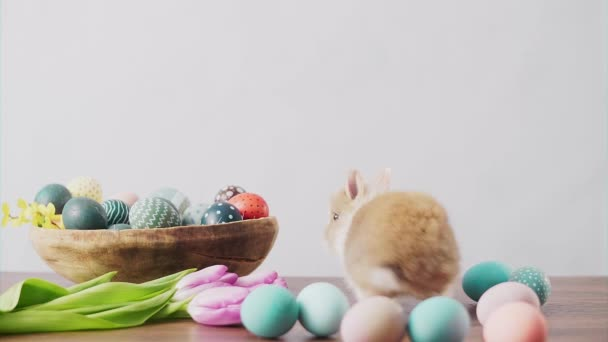 Cute Easter bunny on wooden table with colorful eggs and tulips . Easter holiday decorations, Easter concept background.