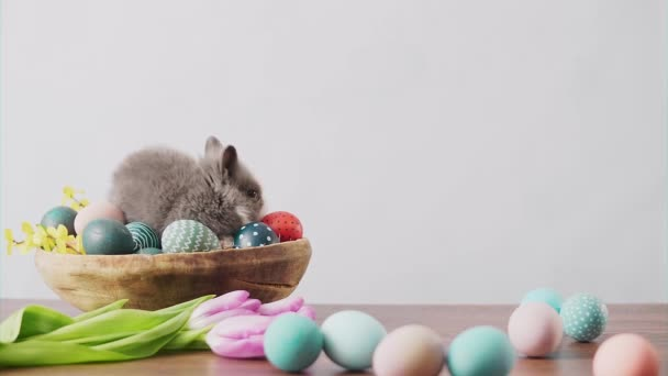 Cute Easter bunny on wooden table with colorful eggs and tulips . Easter holiday decorations.