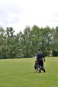 Dog walks with dog trainer