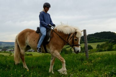 Woman rides Haflinger on meadow