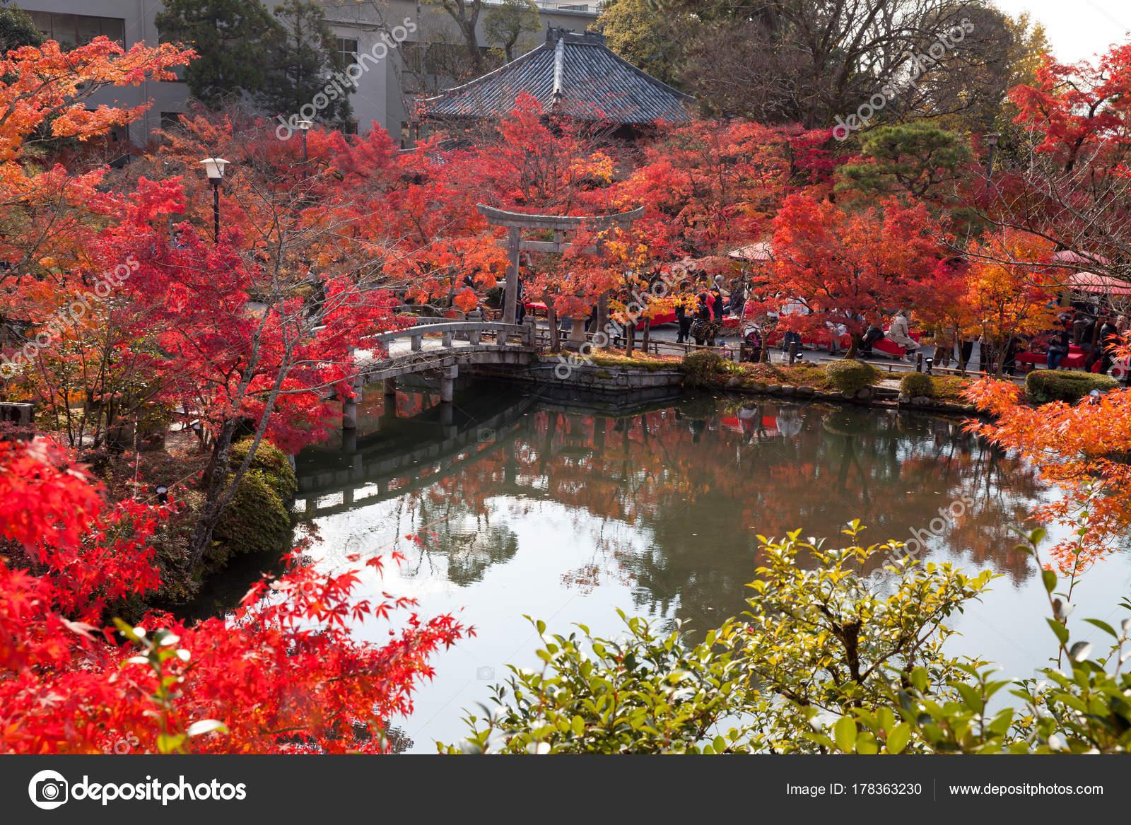 Kyoto Japon 27 Novembre 2017 Paysage De W Jardin Japonais