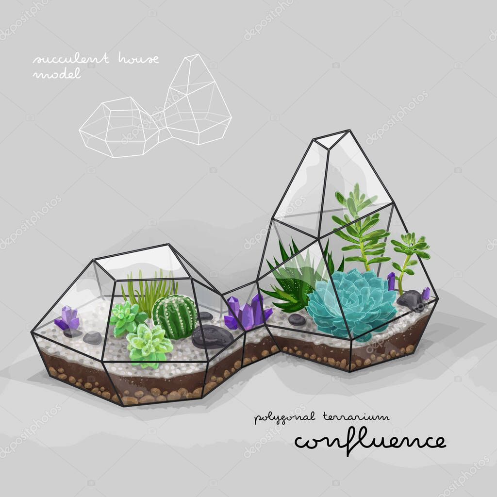 Cactus And Succulent Inside The Double Geometrical Terrarium Florarium Vector Illustration Premium Vector In Adobe Illustrator Ai Ai Format Encapsulated Postscript Eps Eps Format
