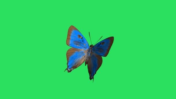 Animace modrý motýl na zeleném pozadí.