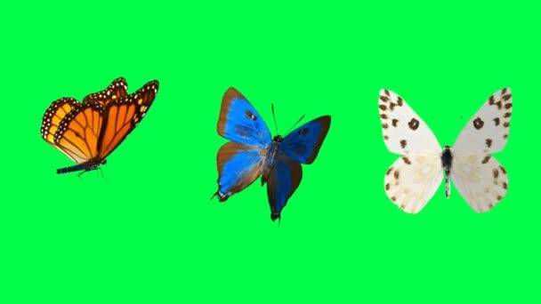 Animace oranžová a modrá motýl na zeleném pozadí.