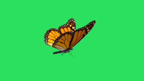 Animation orange butterfly on green background.