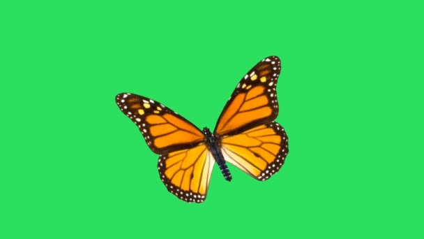 Animace oranžový motýl na zeleném pozadí.
