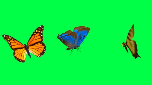 Animation orange and blue butterfly on green background.