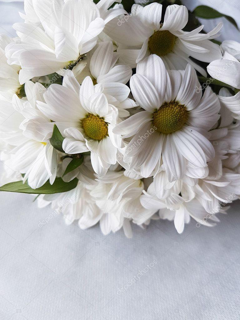 Bouquet Of White Chrysanthemum Flowers Stock Photo Bernashafo