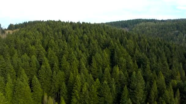 Krásné bezpilotní lety nad lesy s krásným výhledem na hory a lesy