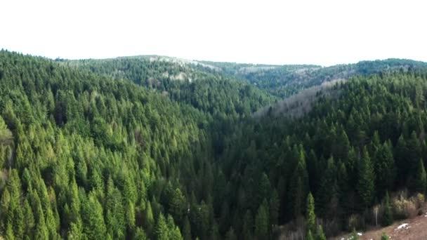 Schöne Drohnenflüge über Wäldern mit schöner Aussicht auf Berge und Wälder