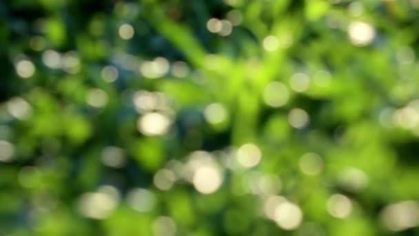 Abstrakte Schönheit der Natur. Defokussierte Nahaufnahme von Land, das mit niedrig wachsendem tropischem Teppichgras bedeckt ist, das im Wind schwankt