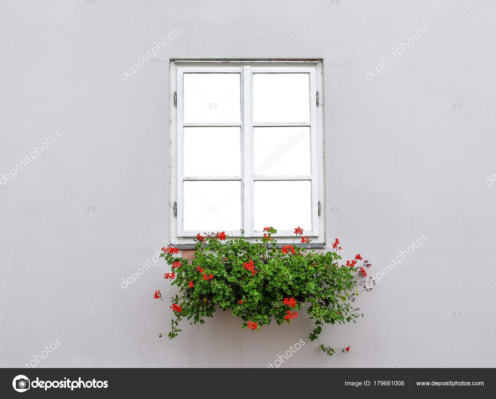 Beautiful Old Window Frame Flower Box Light Grey Wall Geranium ...