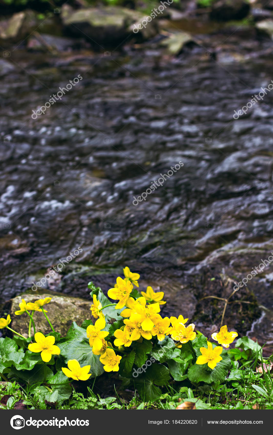 Small Yellow Spring Flowers In The Mountains Stock Photo