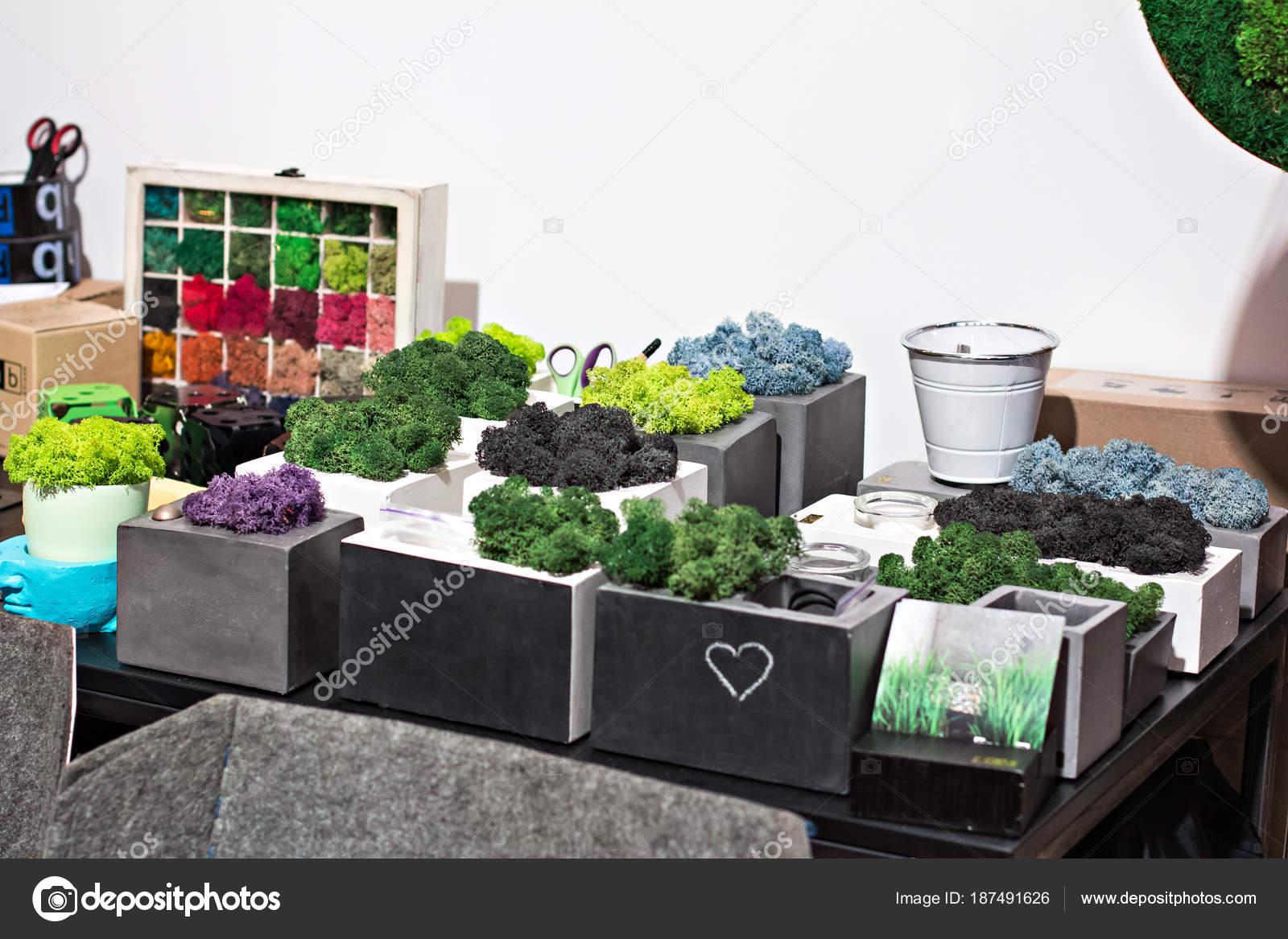 Mensola con piante d appartamento piante in vaso u foto stock
