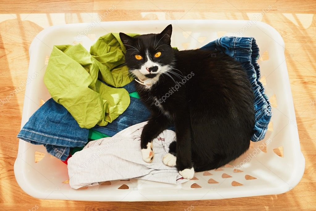 cat in in laundry basket stock photo chalabala 125955094