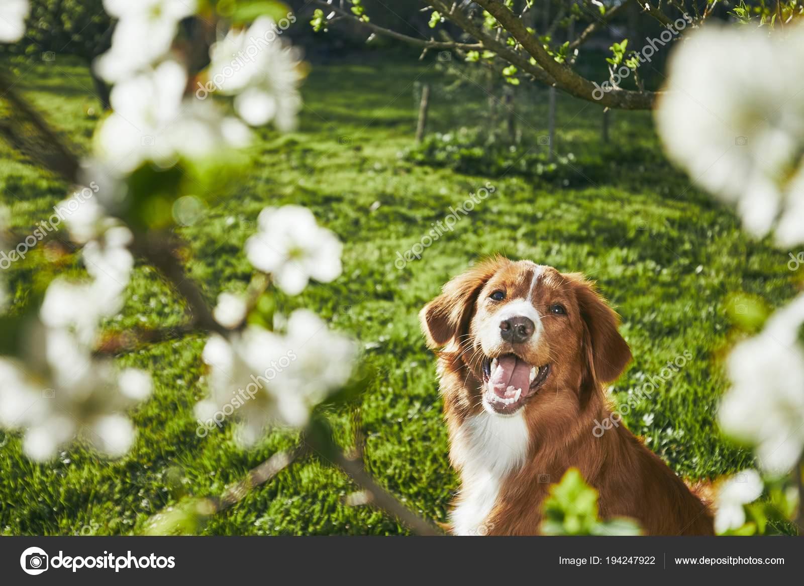 Hond Vriendelijke Tuin : Een tuin voor honden inrichten handige tips makeover