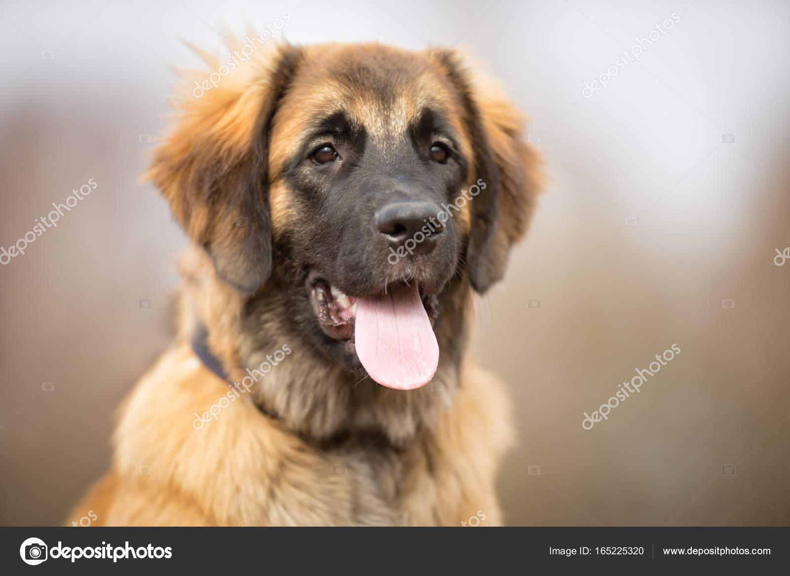 A Beautiful Dog Stock Photo Bigandt 165225320