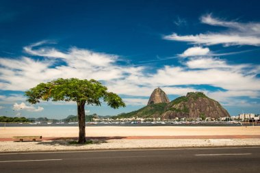 Tree in Botafogo Beach