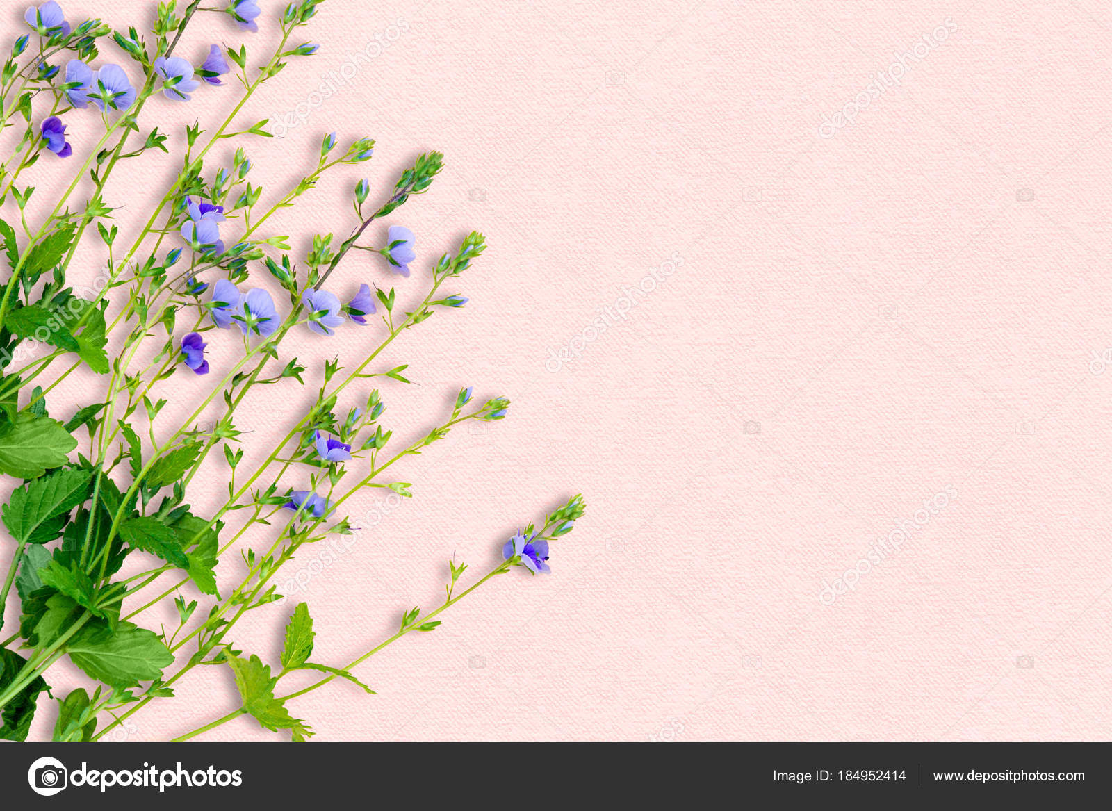 Spring Background With Small Purple Flowers Decoration In Delic