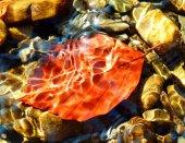 podzimní listí pod vodou