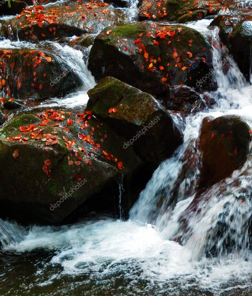 detail color photography of autumn waterfalls