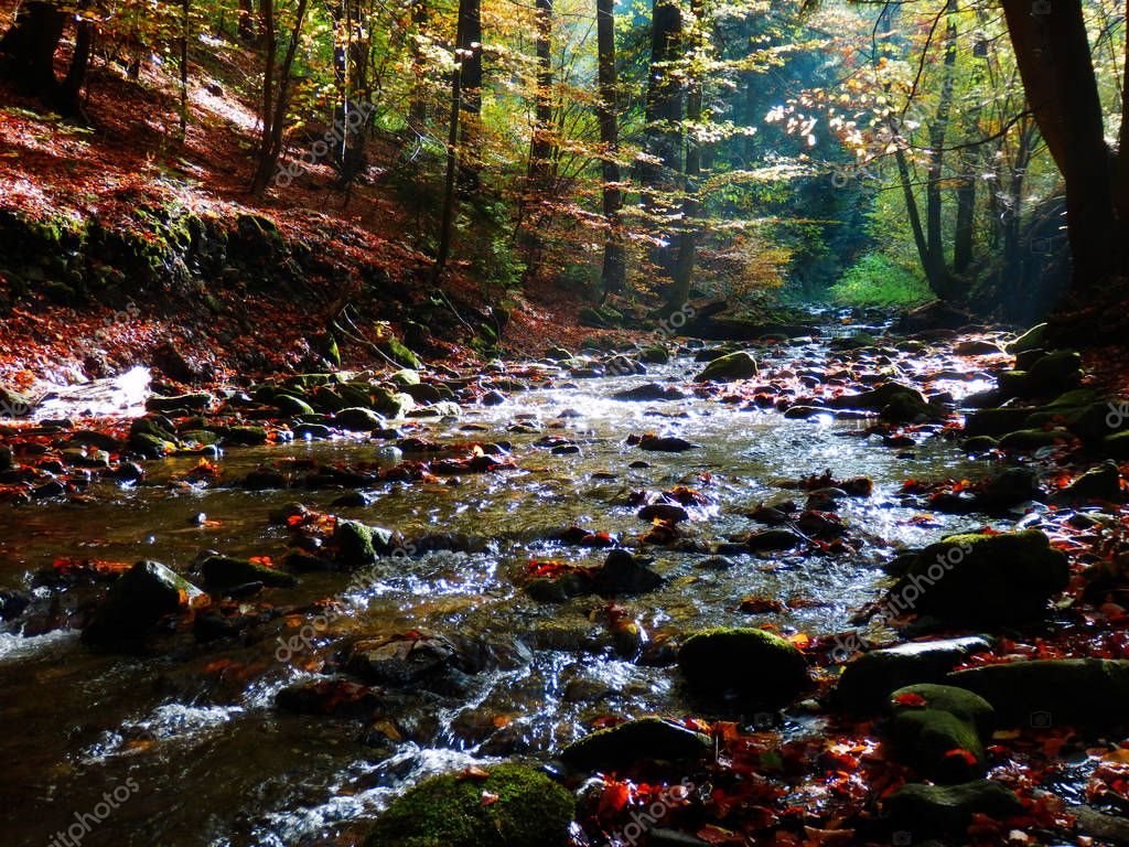 detail photography of mountains creek in autumnal forest