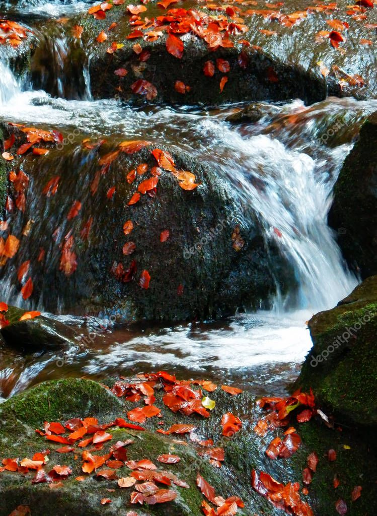 detail photography of waterfall in autumn forest