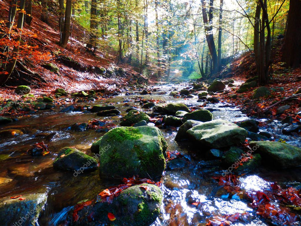 beautiful autumnal photography of mountains brook and beech forest