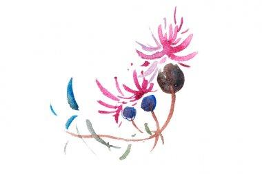 watercolor drawing of fresh garden flowers